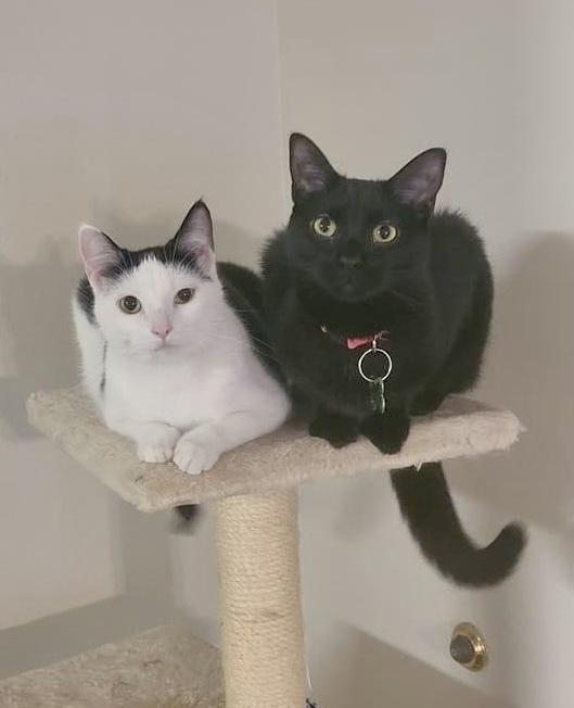 Owl and Tessa 1