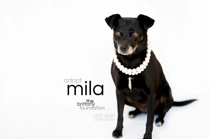 Mila 6