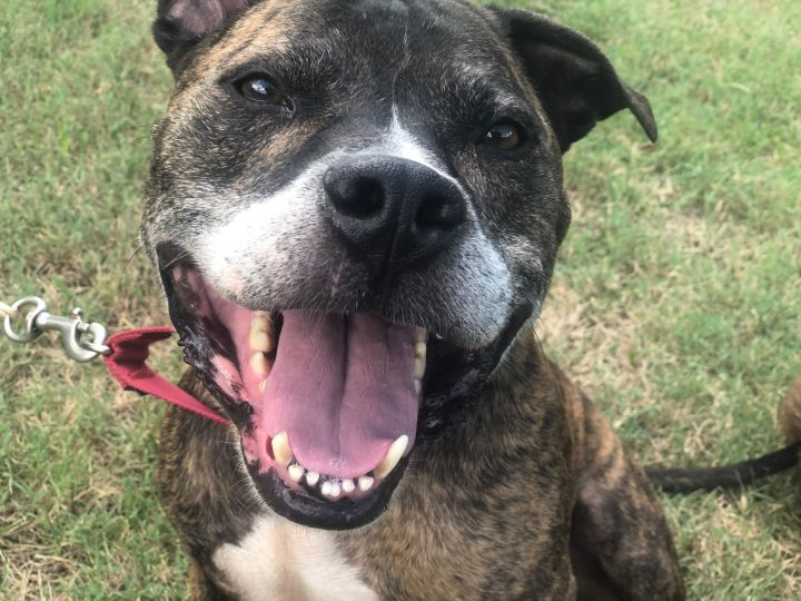 Mars, an adoptable Boxer Mix in Conover, NC