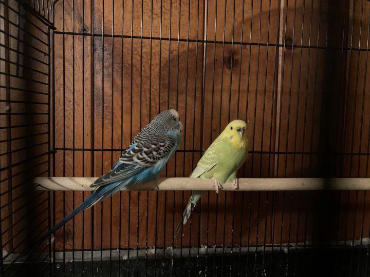 Ary & Leo 1