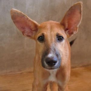 Dogs For Adoption Near Kingston On Petfinder