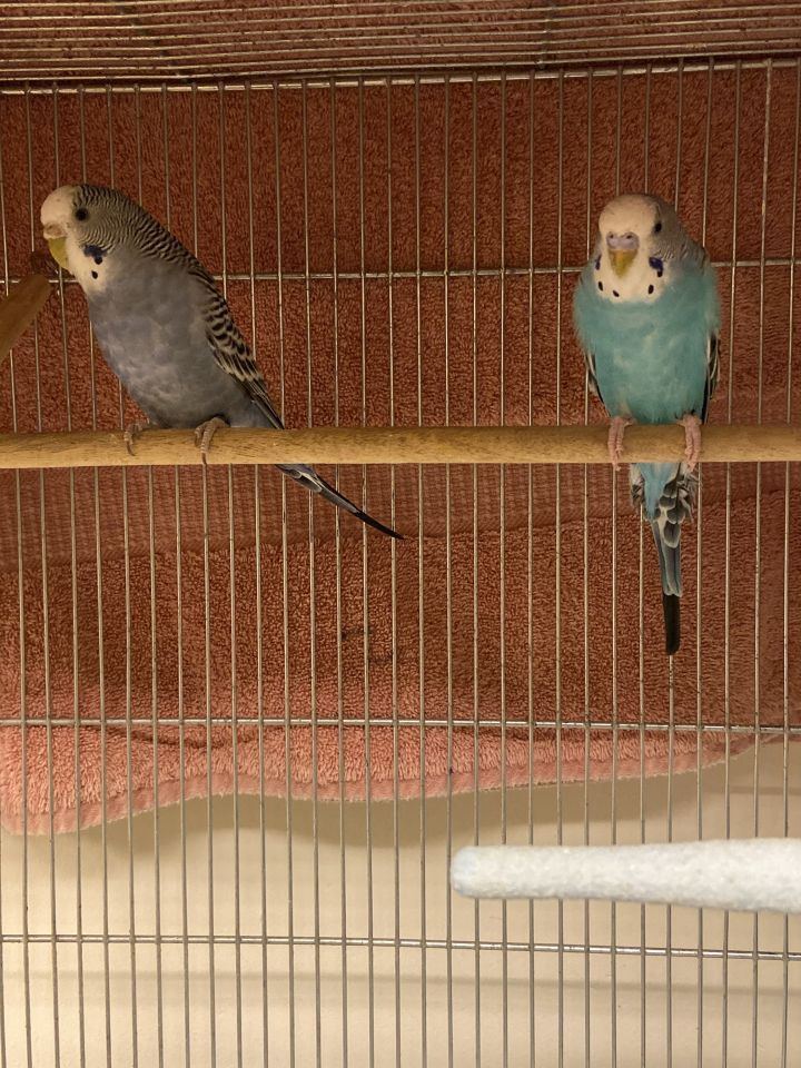 Bluebell & Jaina 1