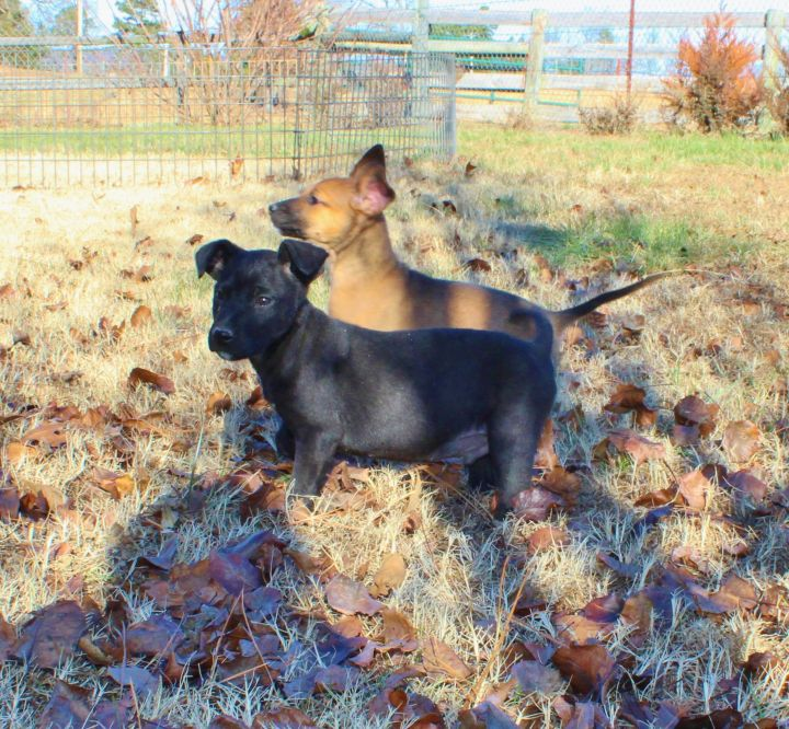 Cooper and Ashton 2