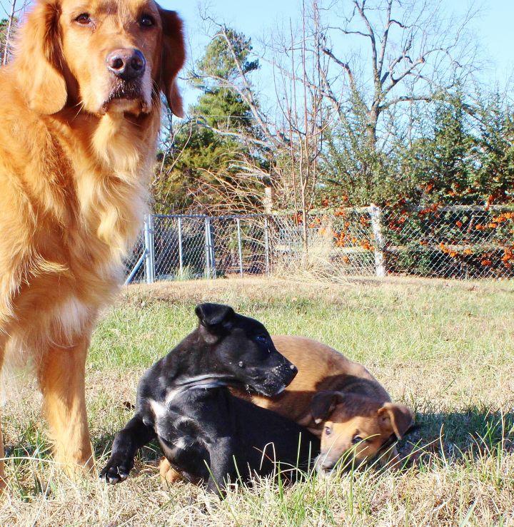Cooper and Ashton 5