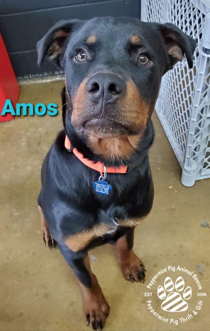 Amos ADOPTION PENDING 3