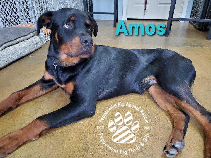 Amos ADOPTION PENDING 5