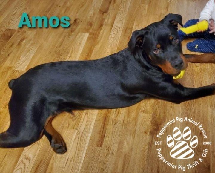 Amos ADOPTION PENDING 6