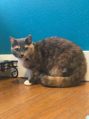 Noel Date of Birth September 28 2015 Im a sweet affectionate somewhat shy girl who was found