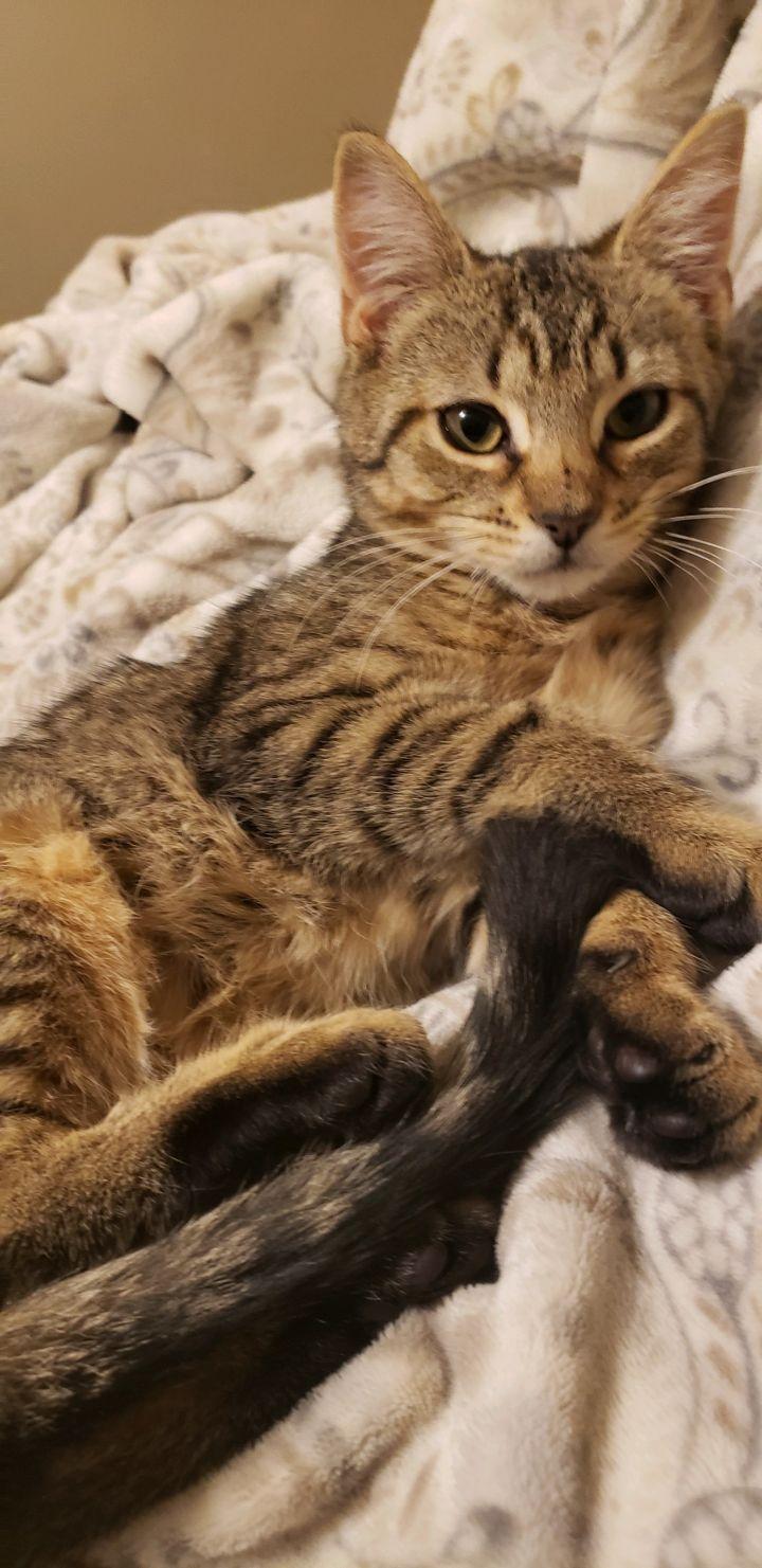 Tessa CH Cat 2