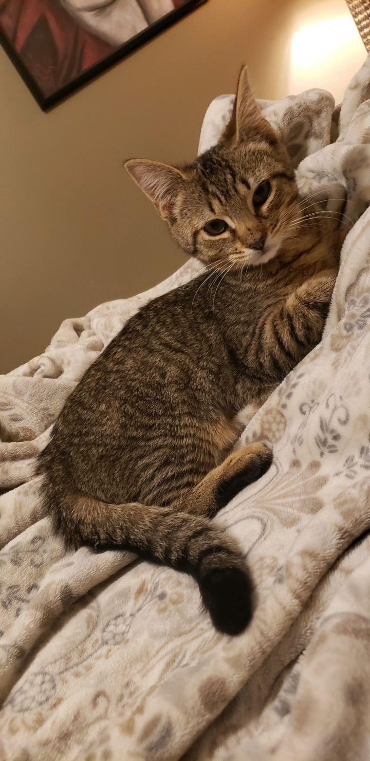 Tessa CH Cat 3