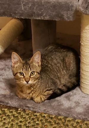 Tessa CH Cat