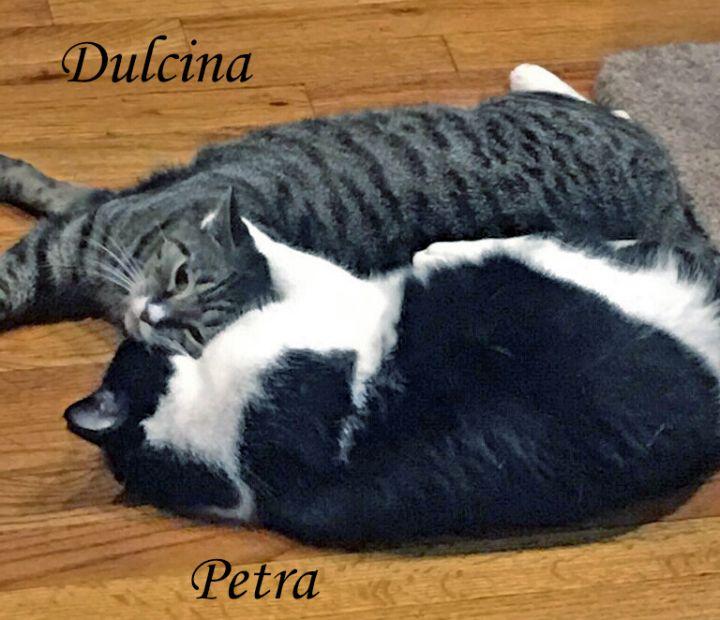 Dulcinae (Dulci, Cindy) 2