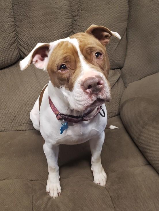 Rosie 4