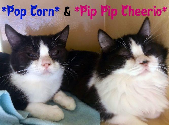"Pop Corn ""bonded to Pip Pip Cheerio"""