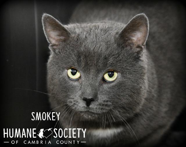 Smokey 1