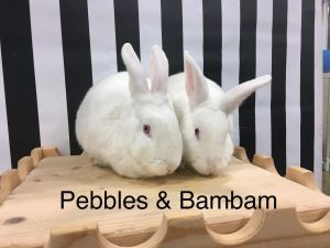 Bambam & Pebbles