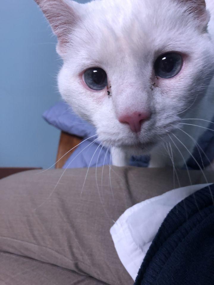Sass - albino! 2