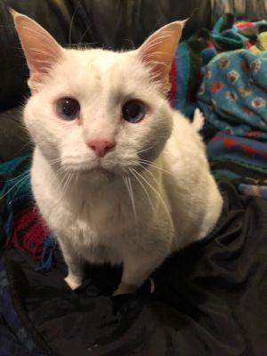 Sass - albino!