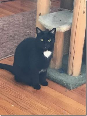Cricket is a very young 6 year female Shes was rescued as a kitten and lives w