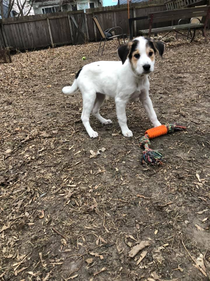 Bria, an adopted Mixed Breed in Madison, WI