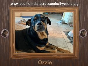 Hi my name is Ozzie and Ive had a pretty rough life up until I became part of the SSRR