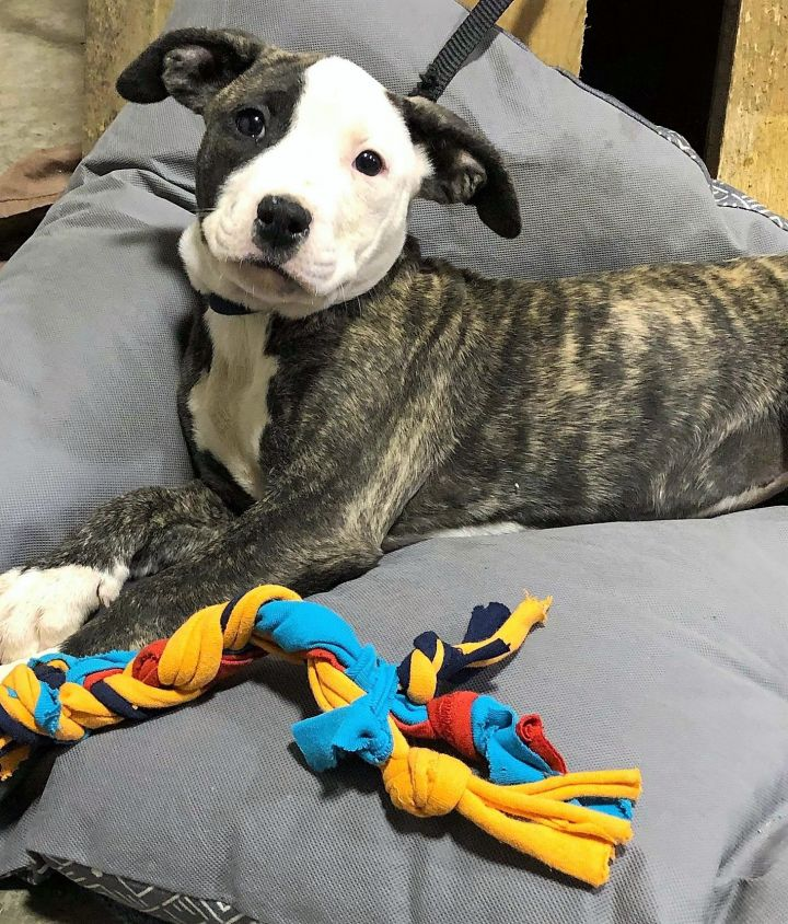 Tori Marie, an adopted Mixed Breed in Northwood, NH