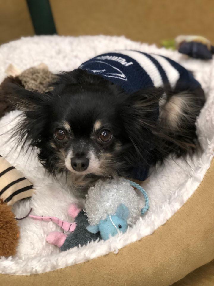 Olivia - update! adopted! 1