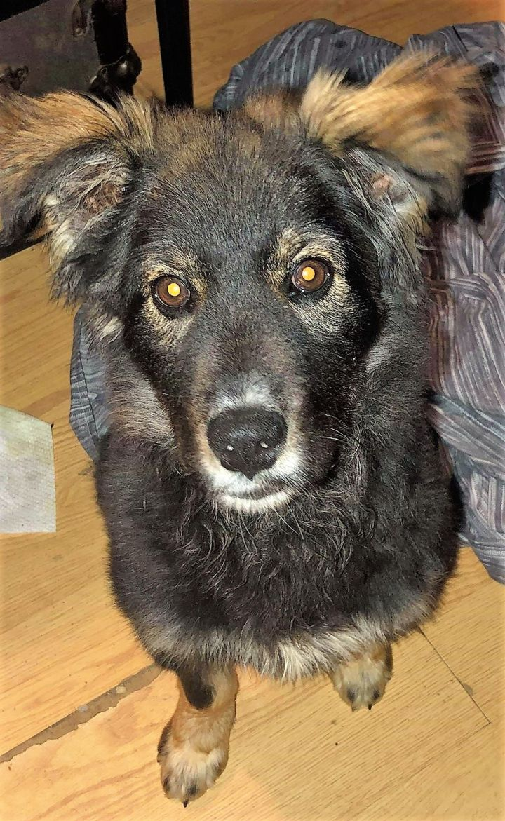 Tory, an adopted Mixed Breed in Northwood, NH