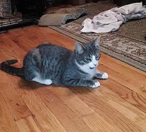 TINY TUX & AVERY Tuxedo Cat