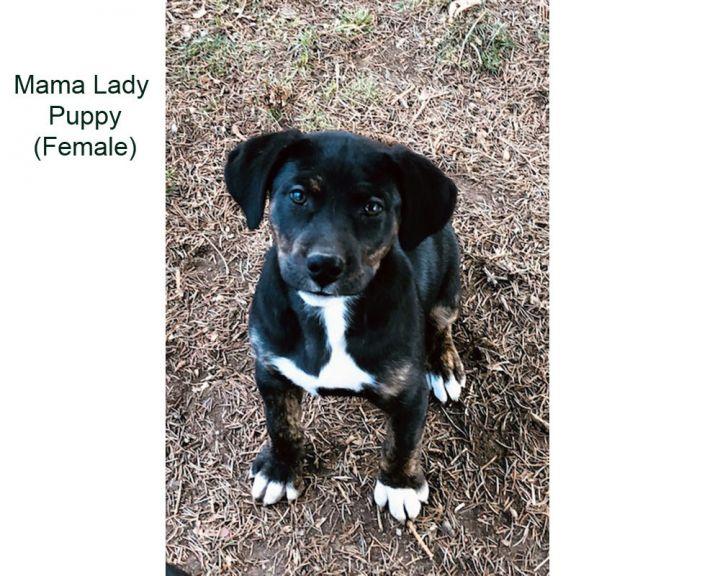 Mama Lady - 2 puppies 3