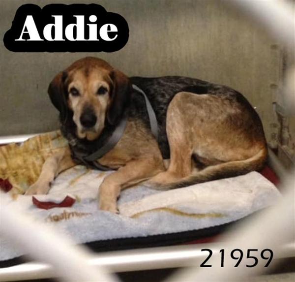 Addie 1