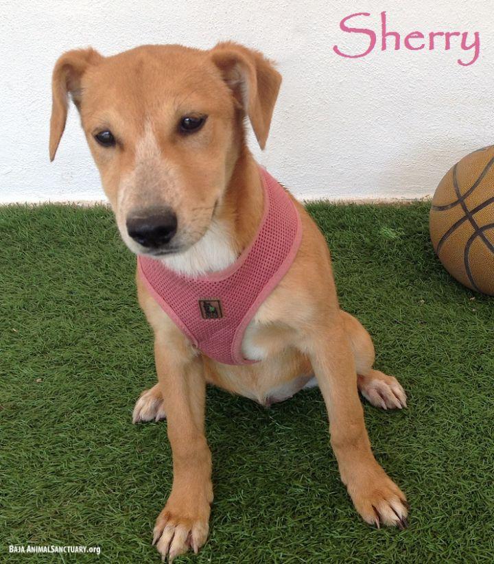 Sherry 1