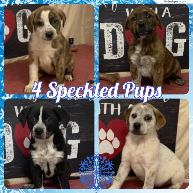 4 Speckled Pups