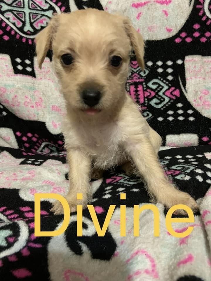 Divine 2