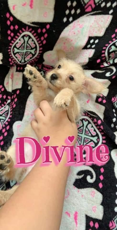 Divine 1