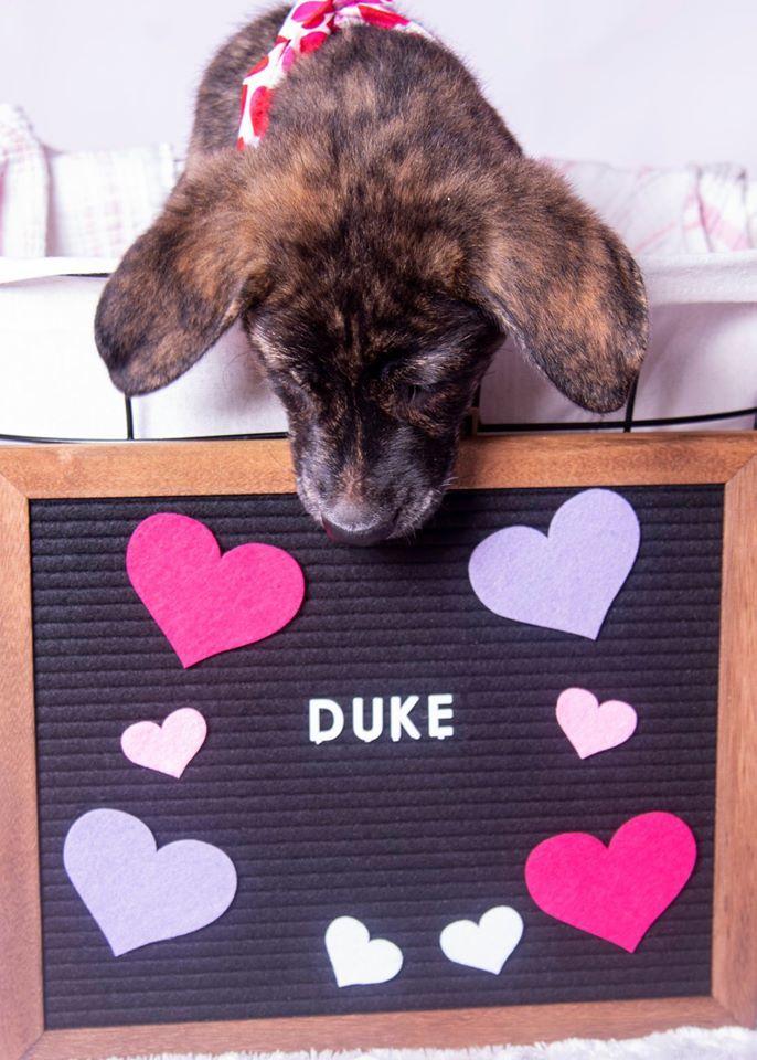 Duke C 1