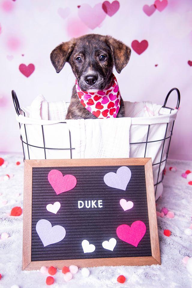 Duke C 5