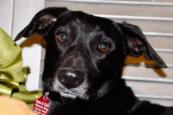 Faith *HERE IN NH*, an adopted Mixed Breed in Northwood, NH