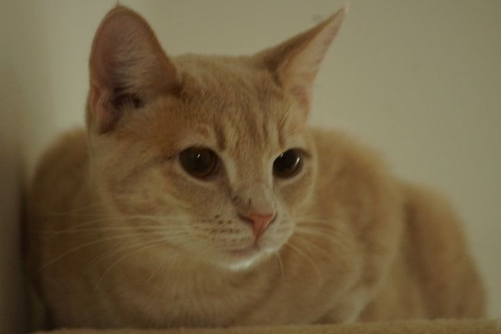 Lenny 4