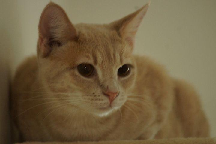Lenny 6