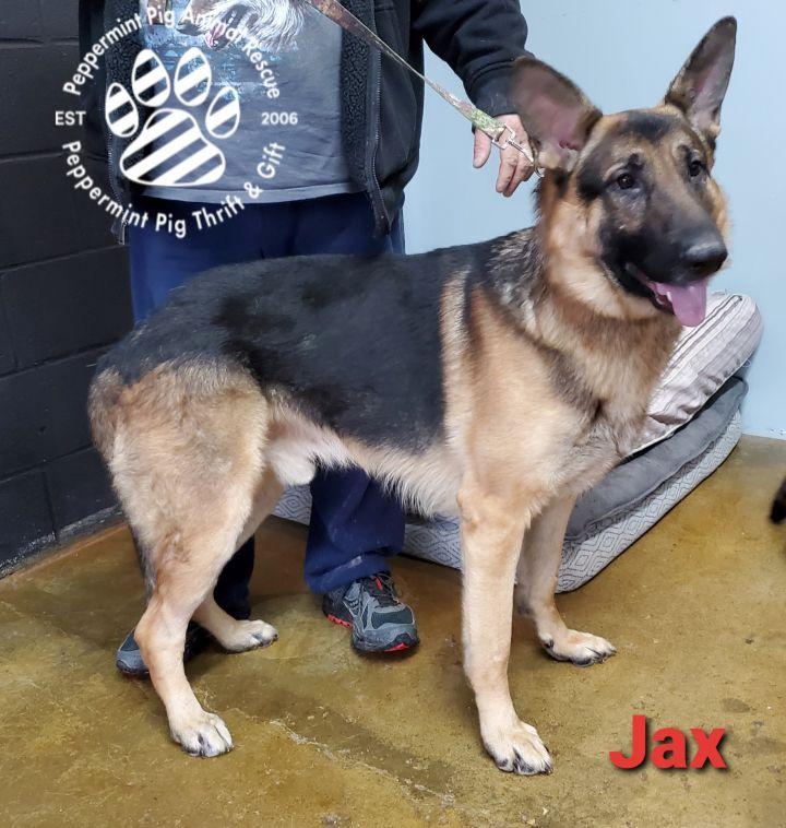 Jax 3