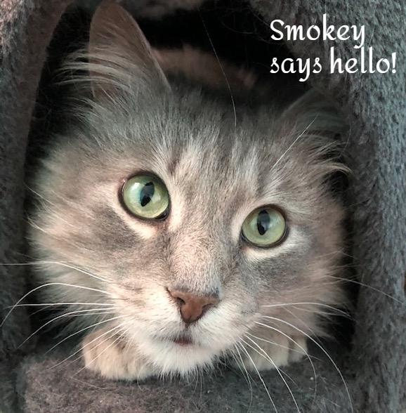 Smokey 6
