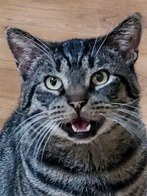SEYMOUR OH SEEEEEYMOUR He is THE BEST cat Seymour is a social butterfly T