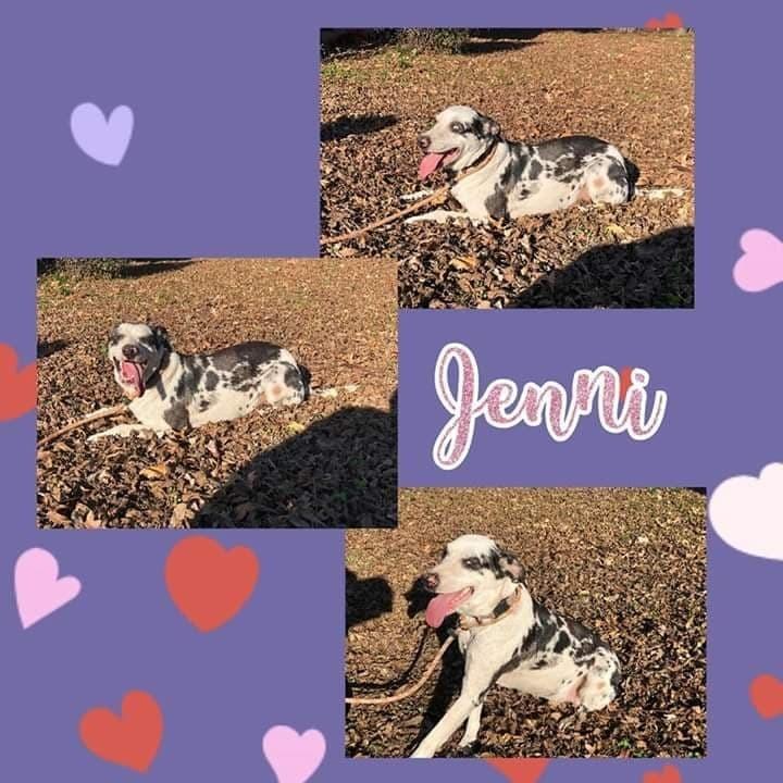 Jenni, an adoptable Cattle Dog & Catahoula Leopard Dog Mix in Chatham, NJ