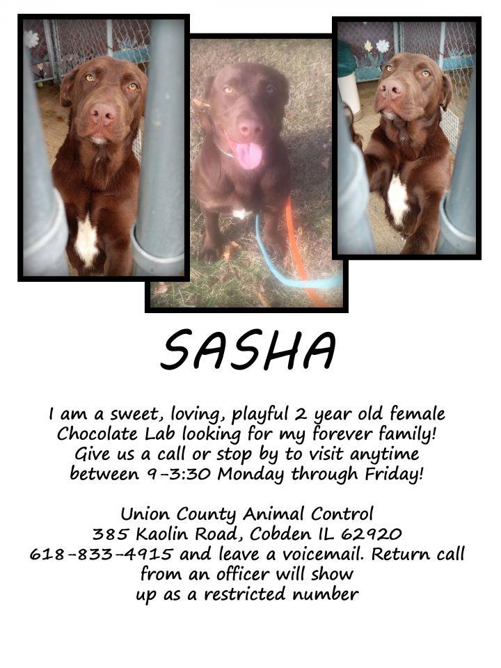 SASHA 3