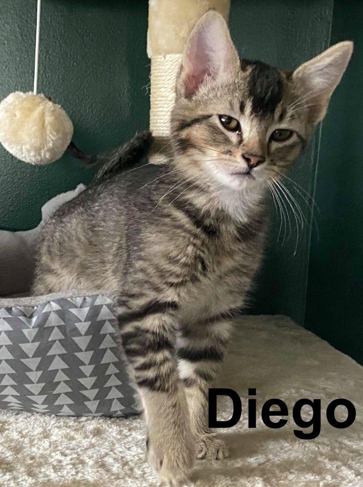 Diego 2