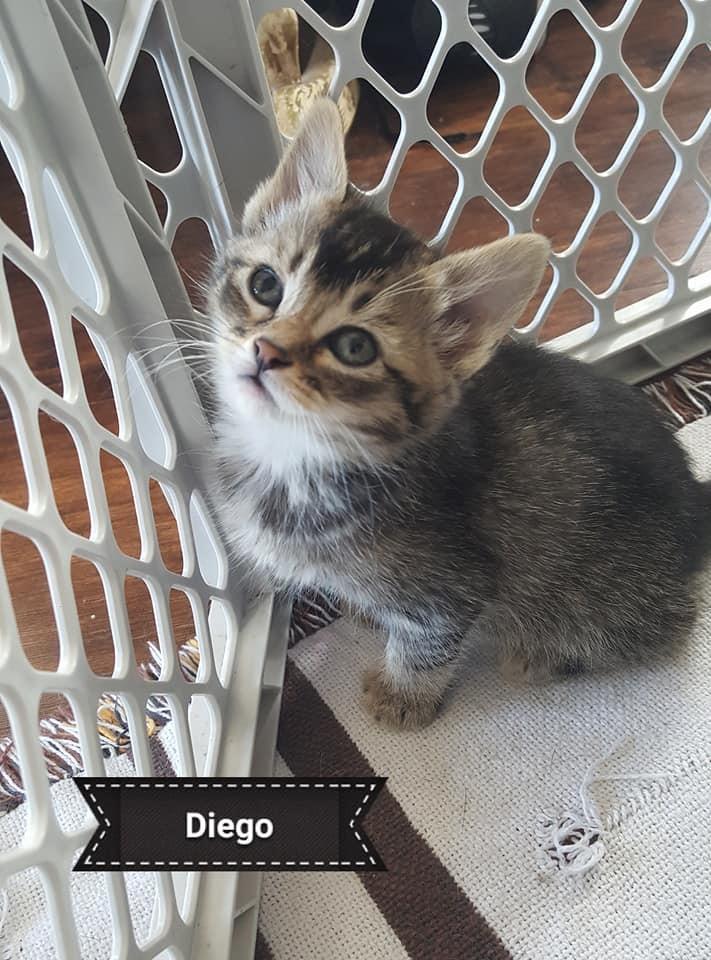Diego 3