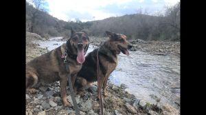 BAILEY & JAX (COURTESY POST)