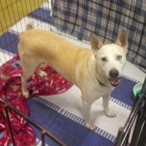 Hi my name is Suzie I am currently in foster care while waiting to be adopted Here is what my