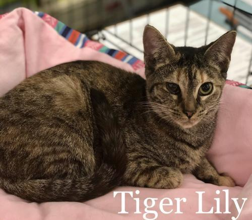 Tiger Lily 1